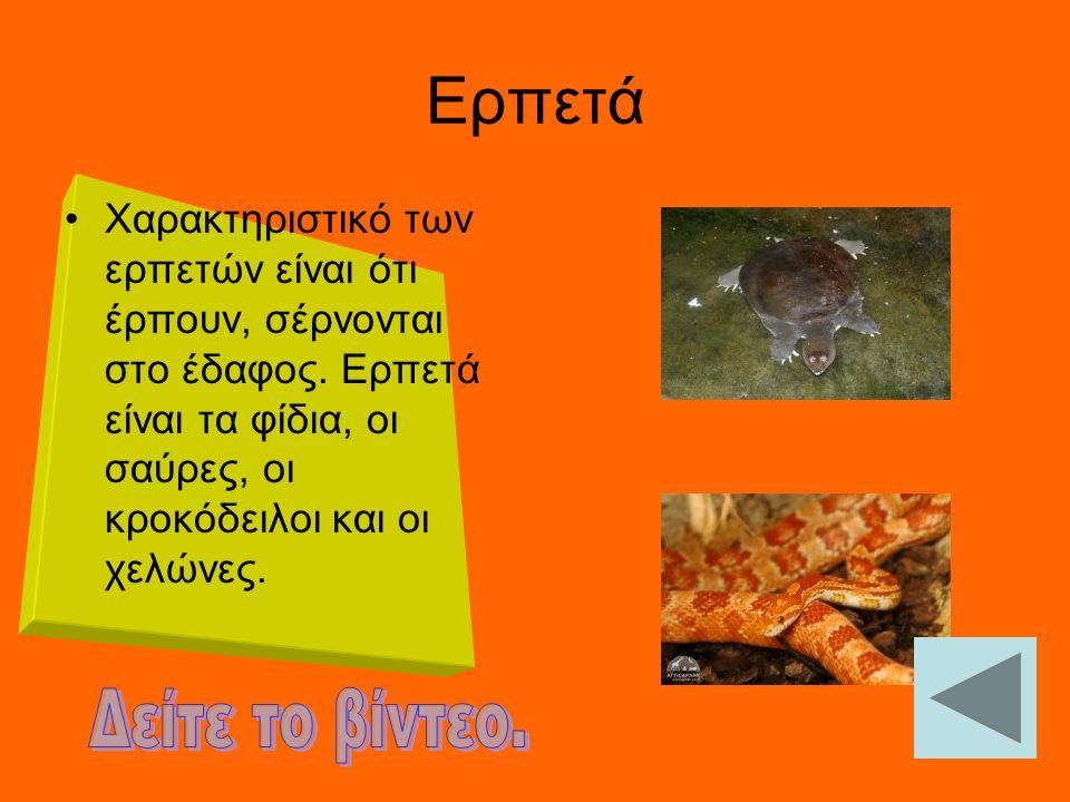 ΑΜΦΙΒΙΑ Κύριο χαρακτηριστικό των αμφιβίων είναι ότι μπορούν να ζουν τόσο στην ξηρά όσο και στο νερό. Στην υποκατηγορία αυτή ανήκουν οι βάτραχοι και οι