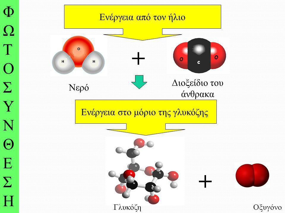 Νερό Διοξείδιο του άνθρακα + ΦΩΤΟΣΥΝΘΕΣΗΦΩΤΟΣΥΝΘΕΣΗ Ενέργεια από τον ήλιο Γλυκόζη + Οξυγόνο Ενέργεια στο μόριο της γλυκόζης