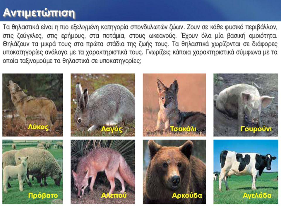 ΑντιμετώπισηΑντιμετώπιση Λύκος ΛαγόςΤσακάλιΓουρούνι ΠρόβατοΑλεπούΑρκούδαΑγελάδα