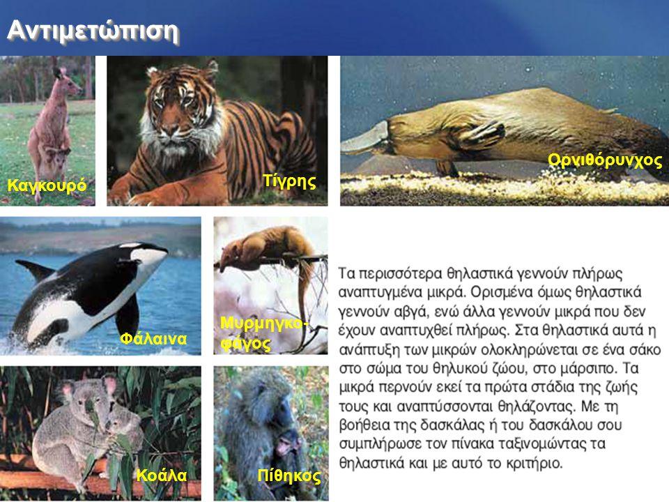 ΑντιμετώπισηΑντιμετώπιση Καγκουρό Τίγρης Ορνιθόρυνχος Φάλαινα Μυρμηγκο- φάγος ΚοάλαΠίθηκος