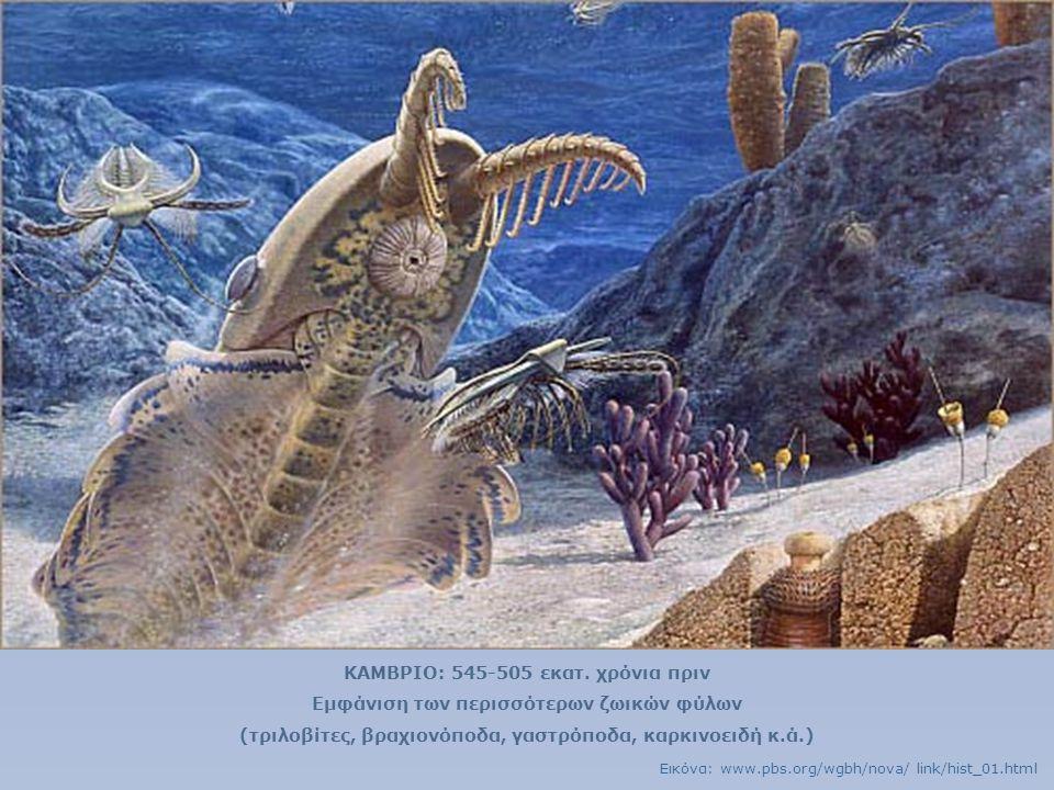 ΚΑΜΒΡΙΟ: 545-505 εκατ. χρόνια πριν Εμφάνιση των περισσότερων ζωικών φύλων (τριλοβίτες, βραχιονόποδα, γαστρόποδα, καρκινοειδή κ.ά.) Εικόνα: www.pbs.org