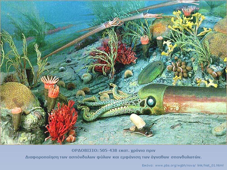 ΟΡΔΟΒΙΣΙΟ: 505-438 εκατ. χρόνια πριν Διαφοροποίηση των ασπόνδυλων φύλων και εμφάνιση των άγναθων σπονδυλωτών. Εικόνα: www.pbs.org/wgbh/nova/ link/hist