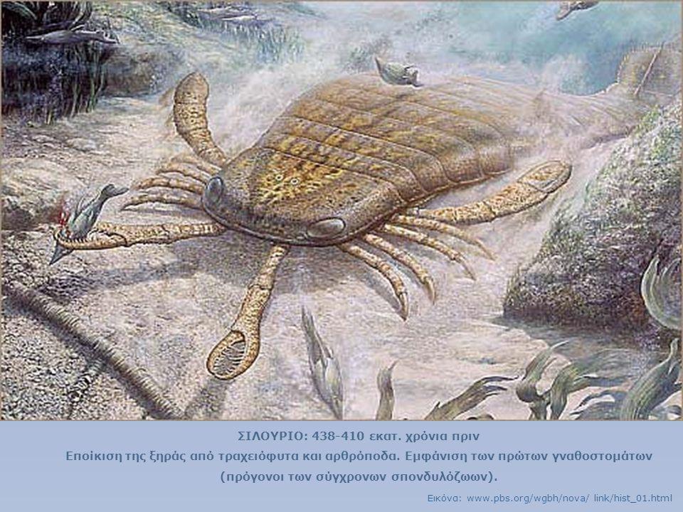 ΣΙΛΟΥΡΙΟ: 438-410 εκατ. χρόνια πριν Εποίκιση της ξηράς από τραχειόφυτα και αρθρόποδα. Εμφάνιση των πρώτων γναθοστομάτων (πρόγονοι των σύγχρονων σπονδυ