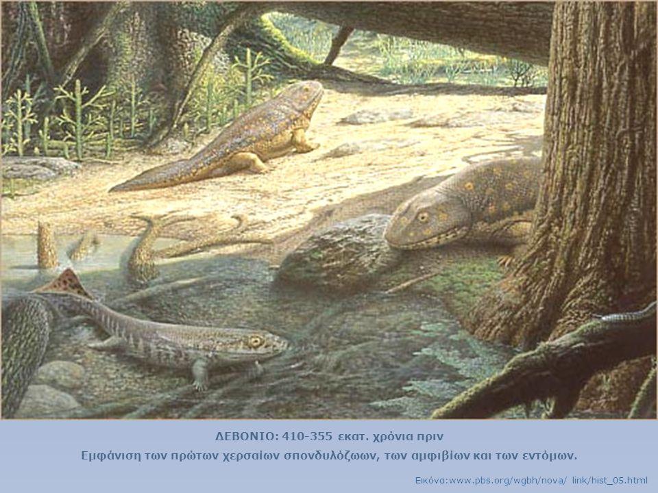 ΔΕΒΟΝΙΟ: 410-355 εκατ. χρόνια πριν Εμφάνιση των πρώτων χερσαίων σπονδυλόζωων, των αμφιβίων και των εντόμων. Εικόνα:www.pbs.org/wgbh/nova/ link/hist_05