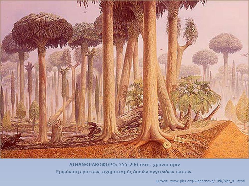 ΛΙΘΑΝΘΡΑΚΟΦΟΡΟ: 355-290 εκατ. χρόνια πριν Εμφάνιση ερπετών, σχηματισμός δασών αγγειωδών φυτών. Εικόνα: www.pbs.org/wgbh/nova/ link/hist_01.html