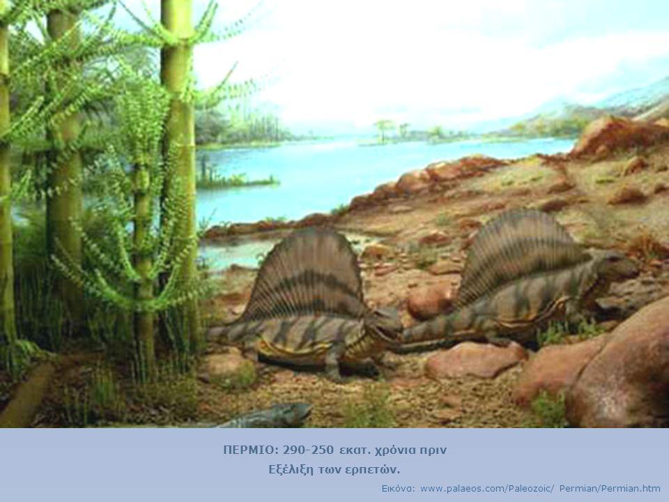 ΠΕΡΜΙΟ: 290-250 εκατ. χρόνια πριν Εξέλιξη των ερπετών. Εικόνα: www.palaeos.com/Paleozoic/ Permian/Permian.htm
