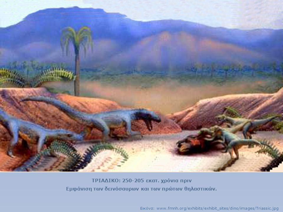 ΤΡΙΑΔΙΚΟ: 250-205 εκατ. χρόνια πριν Εμφάνιση των δεινόσαυρων και των πρώτων θηλαστικών. Εικόνα: www.fmnh.org/exhibits/exhibit_sites/dino/images/Triass