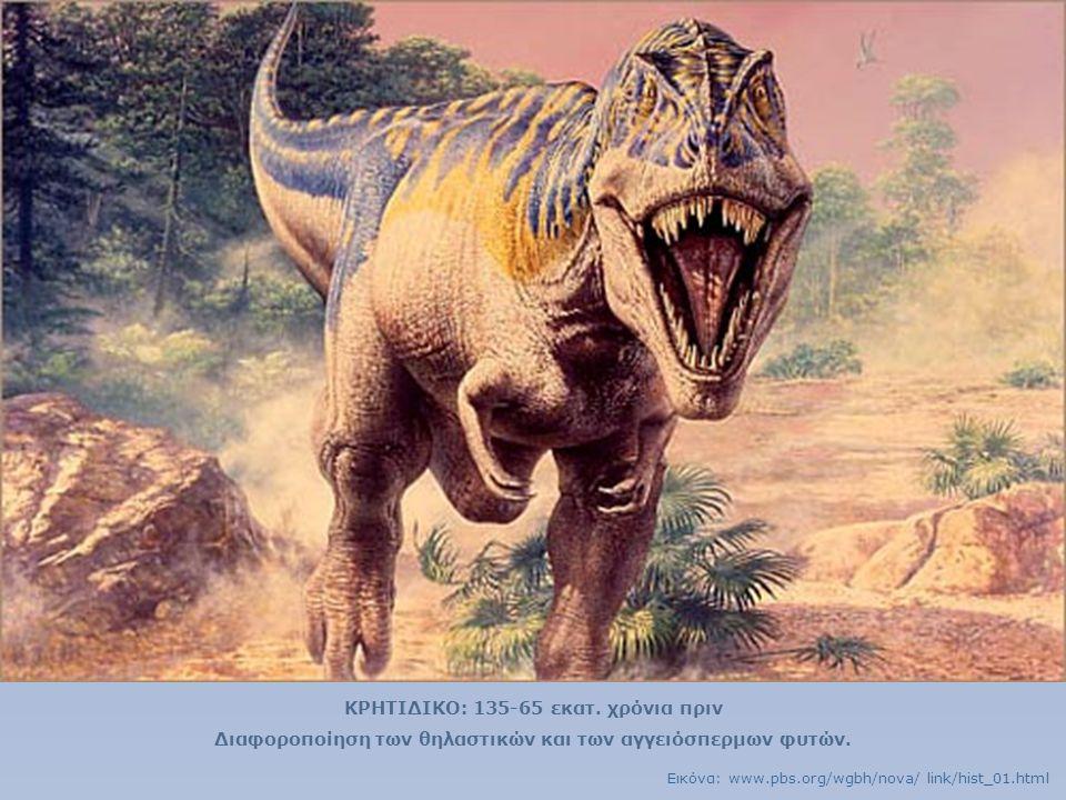 ΚΡΗΤΙΔΙΚΟ: 135-65 εκατ. χρόνια πριν Διαφοροποίηση των θηλαστικών και των αγγειόσπερμων φυτών. Εικόνα: www.pbs.org/wgbh/nova/ link/hist_01.html