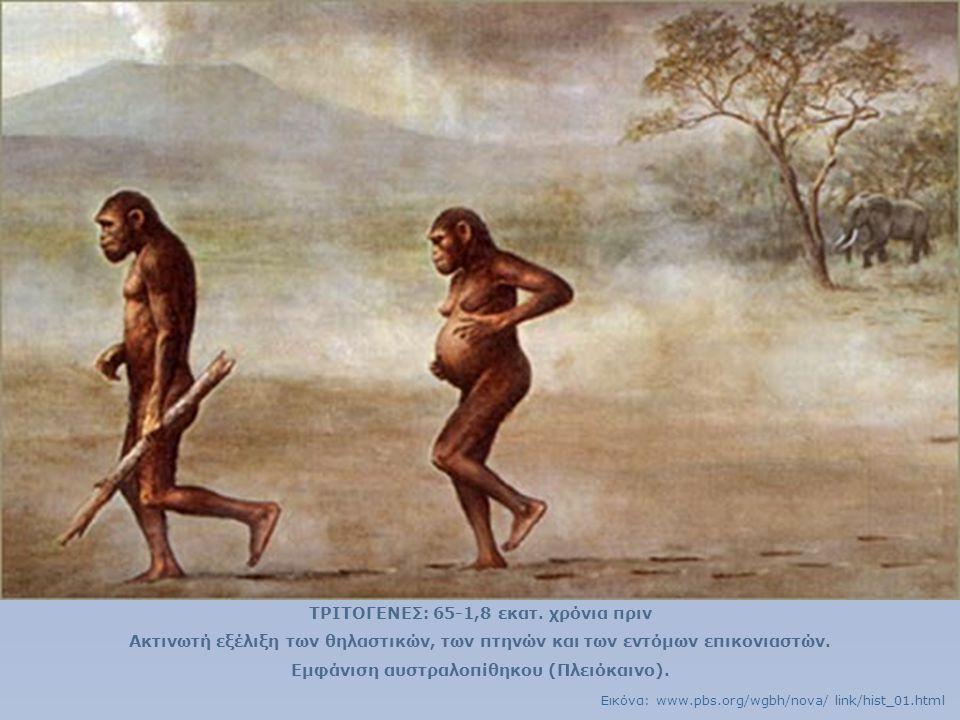 ΤΡΙΤΟΓΕΝΕΣ: 65-1,8 εκατ. χρόνια πριν Ακτινωτή εξέλιξη των θηλαστικών, των πτηνών και των εντόμων επικονιαστών. Εμφάνιση αυστραλοπίθηκου (Πλειόκαινο).