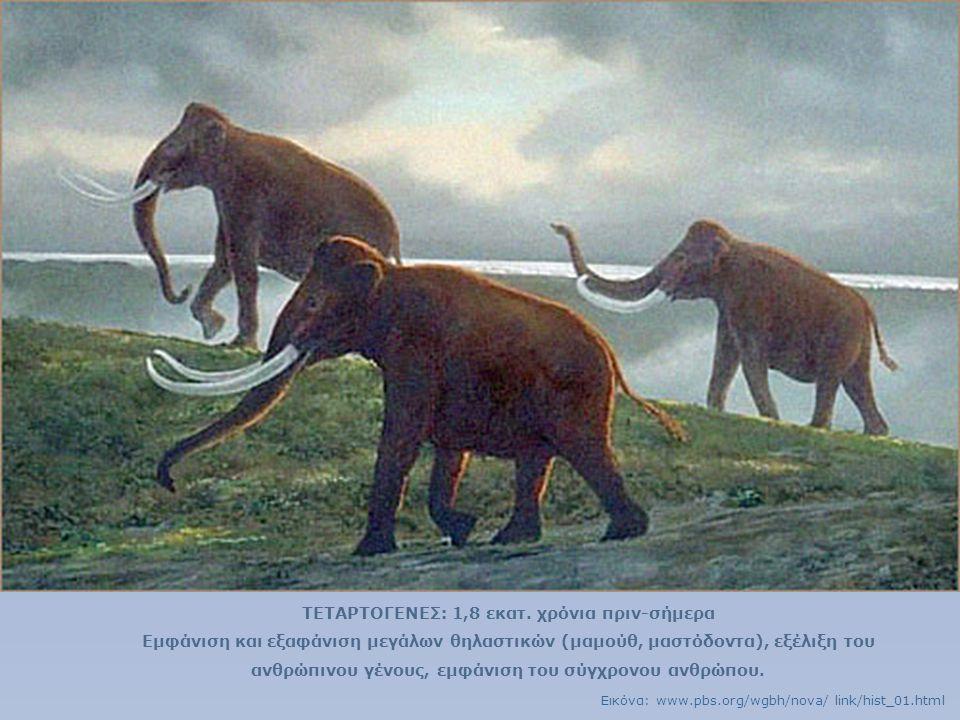 ΤΕΤΑΡΤΟΓΕΝΕΣ: 1,8 εκατ. χρόνια πριν-σήμερα Εμφάνιση και εξαφάνιση μεγάλων θηλαστικών (μαμούθ, μαστόδοντα), εξέλιξη του ανθρώπινου γένους, εμφάνιση του