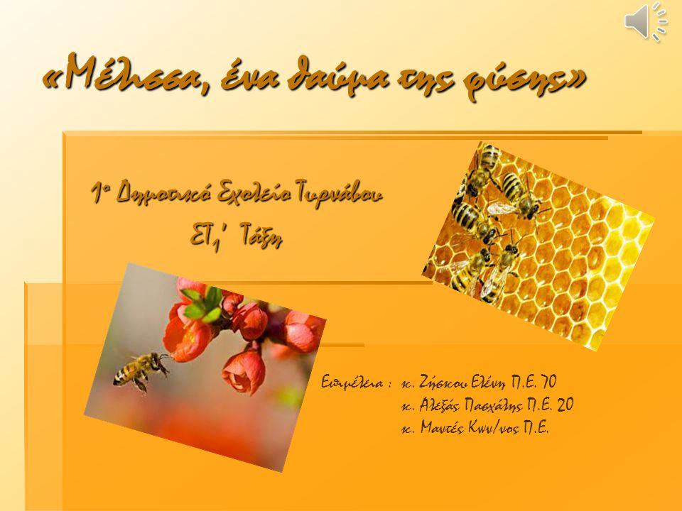 1 ο Δημοτικό Σχολείο Τυρνάβου ΣΤ 1 ' Τάξη «Μέλισσα, ένα θαύμα της φύσης» Επιμέλεια : κ. Ζήσκου Ελένη Π.Ε. 70 κ. Αλεξάς Πασχάλης Π.Ε. 20 κ. Μαντές Κων/