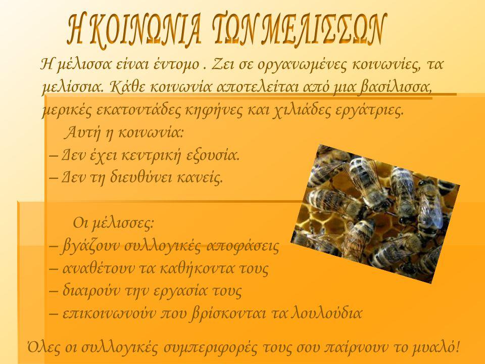 Η μέλισσα είναι έντομο. Ζει σε οργανωμένες κοινωνίες, τα μελίσσια. Κάθε κοινωνία αποτελείται από μια βασίλισσα, μερικές εκατοντάδες κηφήνες και χιλιάδ