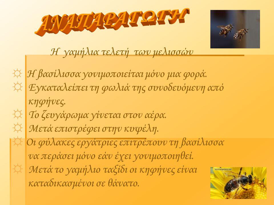  Μέλι και ομορφιά, συνυπάρχουν αιώνες. Τρέφει το δέρμα.