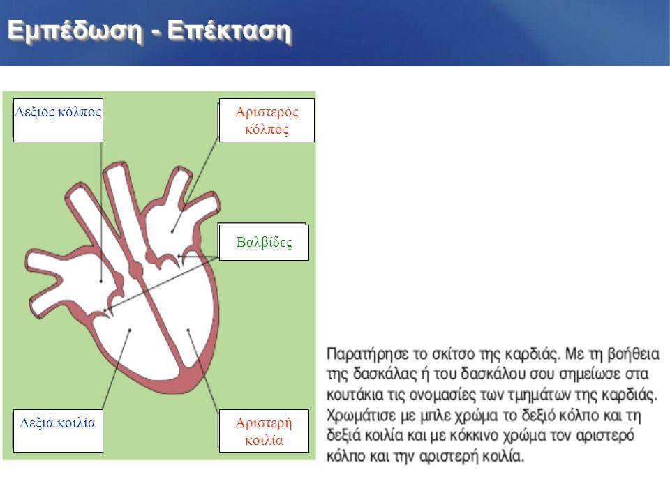  Ο σφυγμός που αισθάνομαι οφείλεται στην κίνηση της καρδιάς. Πού οφείλεται ο σφυγμός που αισθάνεσαι; Πότε ο ρυθμός της καρδιάς είναι πιο γρήγορος; 