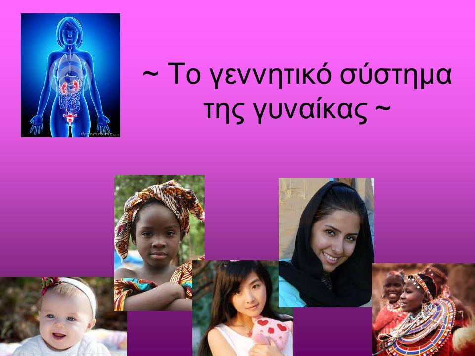 ~ Το γεννητικό σύστημα της γυναίκας ~