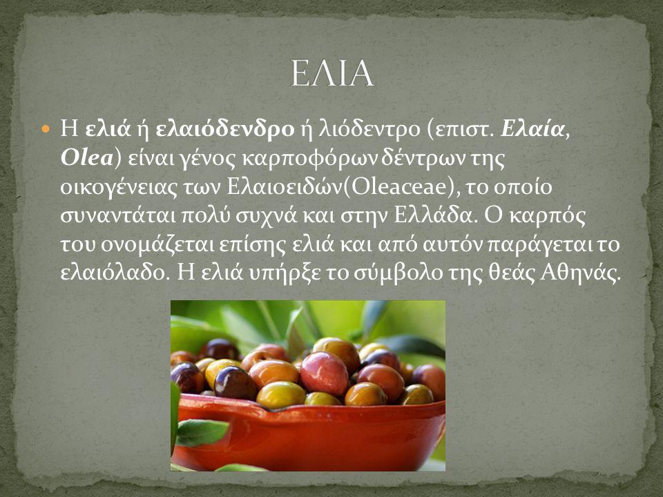 Η ελιά ή ελαιόδενδρο ή λιόδεντρο (επιστ. Ελαία, Olea) είναι γένος καρποφόρων δέντρων της οικογένειας των Ελαιοειδών(Oleaceae), το οποίο συναντάται πολ