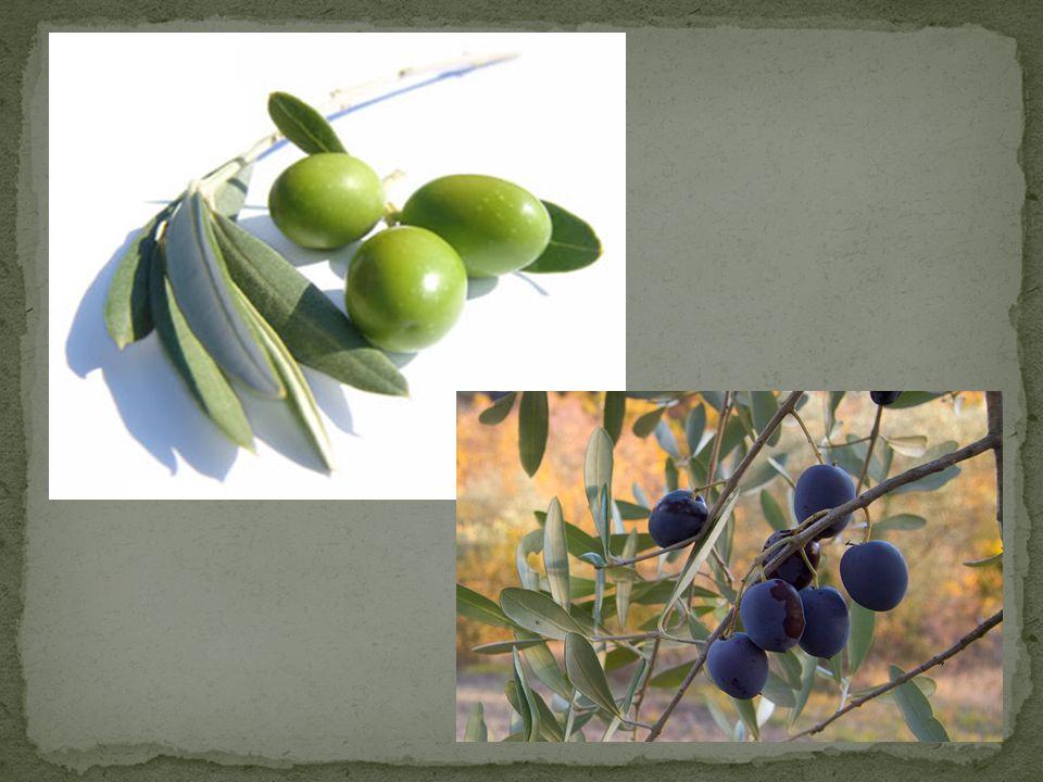 Ελαιόλαδο (ή απλώς λάδι) ονομάζεται στα Ελληνικά το λάδι που προέρχεται από τους καρπούς της ελιάς.