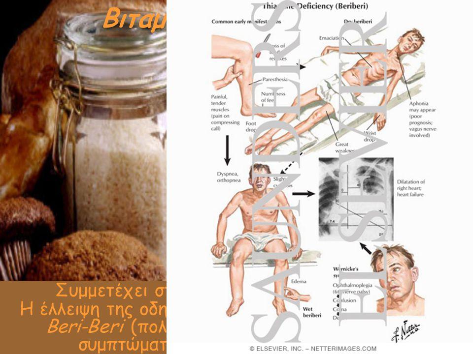Βιταμίνη Β1 (θειαμίνη) Συμμετέχει στο μεταβολισμό των θρεπτικών συστατικών Διάφορα κρέατα και κυρίως το χοιρινό, τα ολικής άλεσης δημητριακά, τα όσπρι