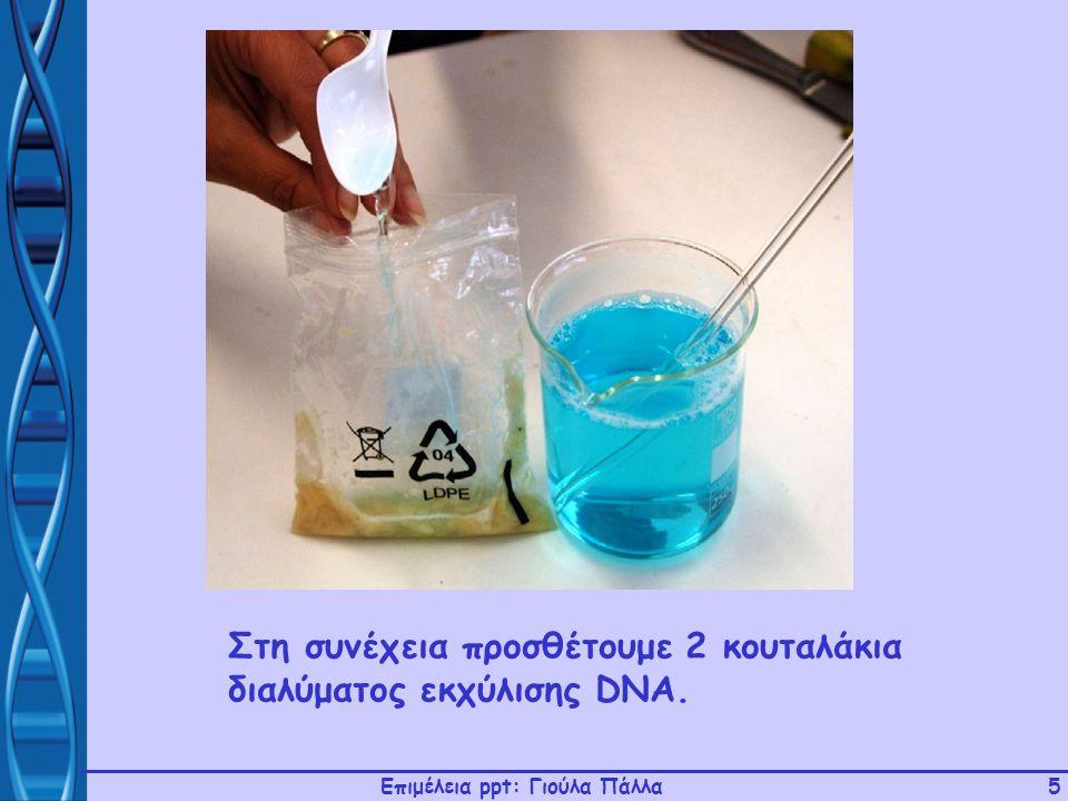 Επιμέλεια ppt: Γιούλα Πάλλα5 Στη συνέχεια προσθέτουμε 2 κουταλάκια διαλύματος εκχύλισης DNA.