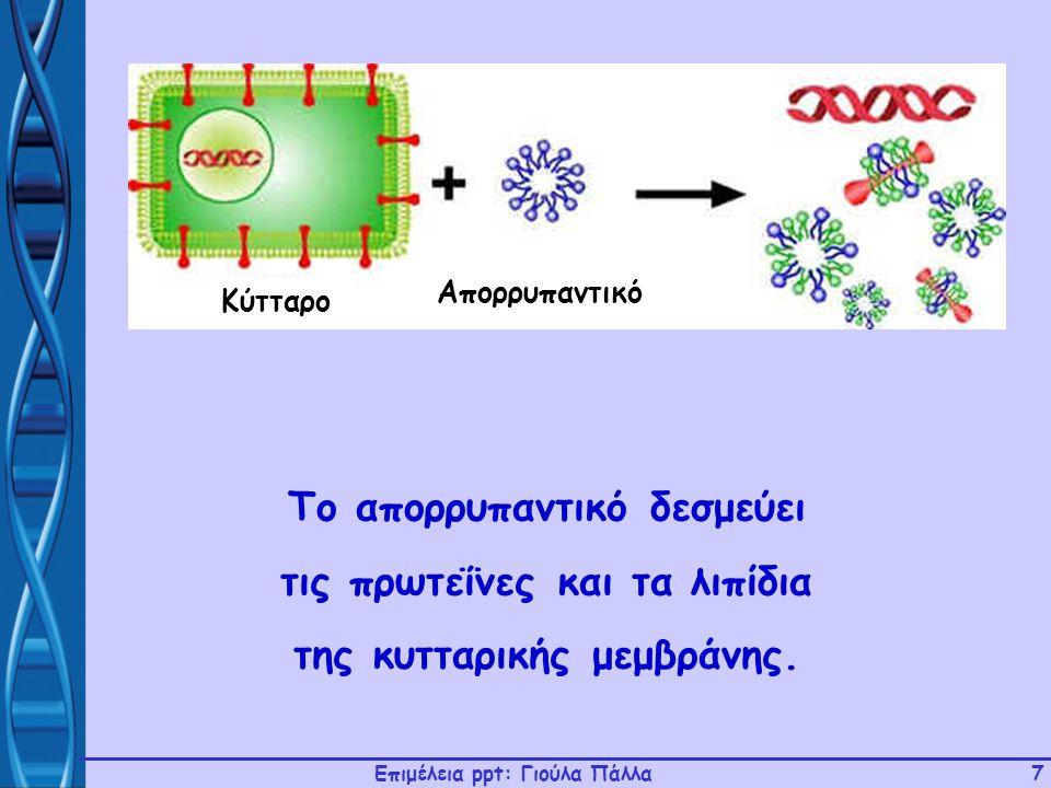 Επιμέλεια ppt: Γιούλα Πάλλα7 Το απορρυπαντικό δεσμεύει τις πρωτεΐνες και τα λιπίδια της κυτταρικής μεμβράνης. Κύτταρο Απορρυπαντικό
