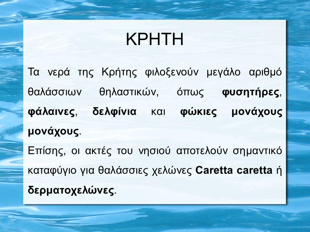 Τα νερά της Κρήτης φιλοξενούν μεγάλο αριθμό θαλάσσιων θηλαστικών, όπως φυσητήρες, φάλαινες, δελφίνια και φώκιες μονάχους μονάχους. Επίσης, οι ακτές το
