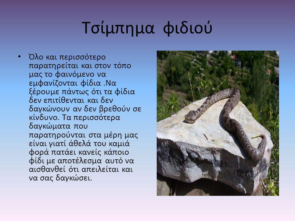 Τσίμπημα φιδιού Όλο και περισσότερο παρατηρείται και στον τόπο μας το φαινόμενο να εμφανίζονται φίδια.Να ξέρουμε πάντως ότι τα φίδια δεν επιτίθενται κ