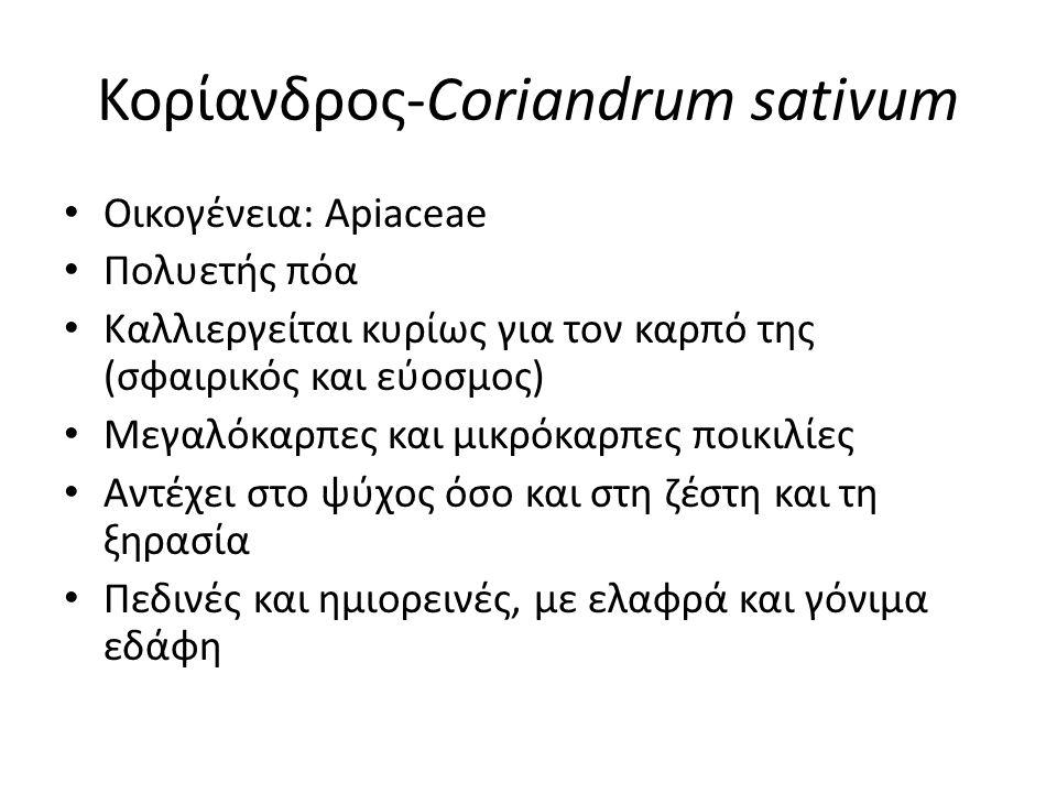 Κορίανδρος-Coriandrum sativum Οικογένεια: Apiaceae Πολυετής πόα Καλλιεργείται κυρίως για τον καρπό της (σφαιρικός και εύοσμος) Μεγαλόκαρπες και μικρόκαρπες ποικιλίες Αντέχει στο ψύχος όσο και στη ζέστη και τη ξηρασία Πεδινές και ημιορεινές, με ελαφρά και γόνιμα εδάφη