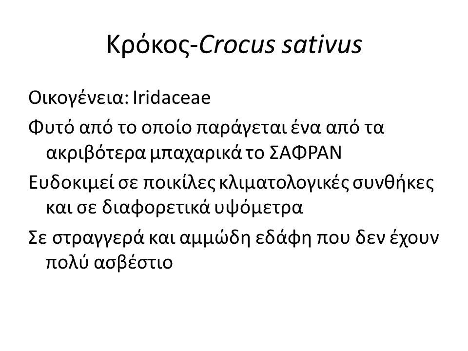 Κρόκος-Crocus sativus Οικογένεια: Iridaceae Φυτό από το οποίο παράγεται ένα από τα ακριβότερα μπαχαρικά το ΣΑΦΡΑΝ Ευδοκιμεί σε ποικίλες κλιματολογικές συνθήκες και σε διαφορετικά υψόμετρα Σε στραγγερά και αμμώδη εδάφη που δεν έχουν πολύ ασβέστιο