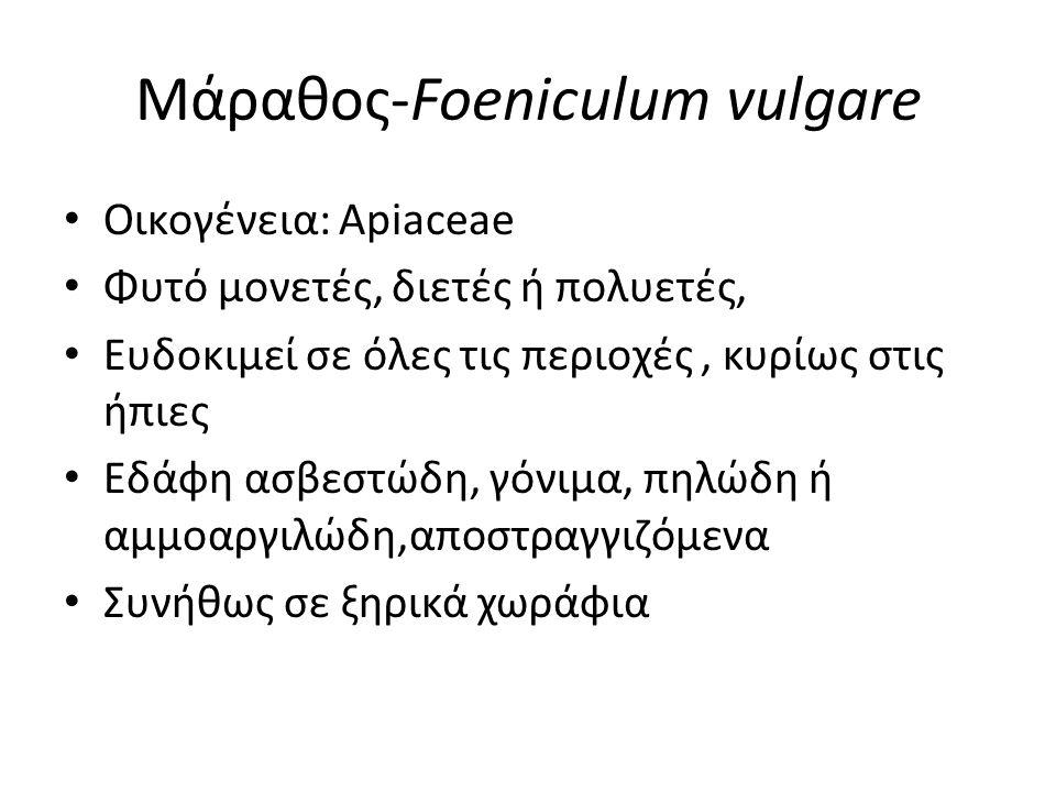 Μάραθος-Foeniculum vulgare Οικογένεια: Apiaceae Φυτό μονετές, διετές ή πολυετές, Ευδοκιμεί σε όλες τις περιοχές, κυρίως στις ήπιες Εδάφη ασβεστώδη, γόνιμα, πηλώδη ή αμμοαργιλώδη,αποστραγγιζόμενα Συνήθως σε ξηρικά χωράφια