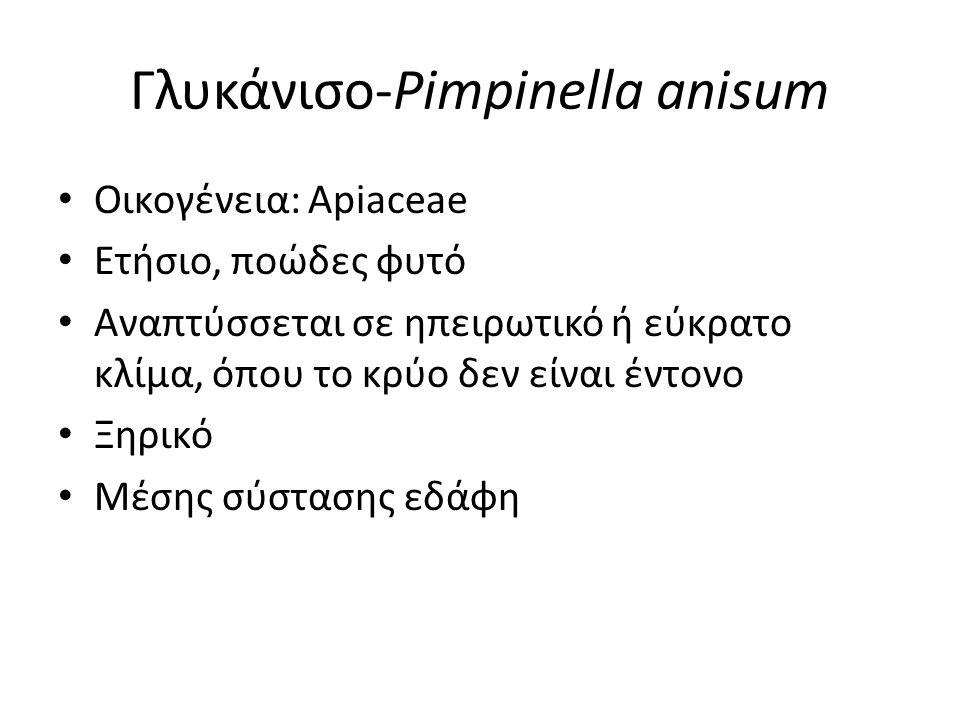 Γλυκάνισο-Pimpinella anisum Οικογένεια: Apiaceae Ετήσιο, ποώδες φυτό Αναπτύσσεται σε ηπειρωτικό ή εύκρατο κλίμα, όπου το κρύο δεν είναι έντονο Ξηρικό Μέσης σύστασης εδάφη