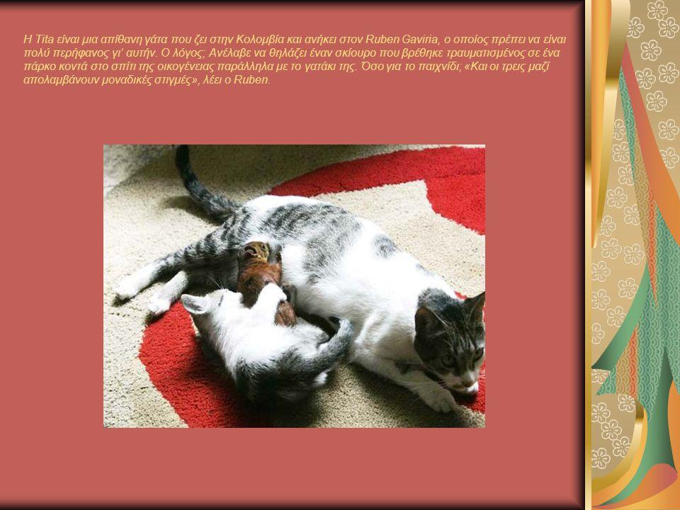 H Tita είναι μια απίθανη γάτα που ζει στην Κολομβία και ανήκει στον Ruben Gaviria, ο οποίος πρέπει να είναι πολύ περήφανος γι' αυτήν.