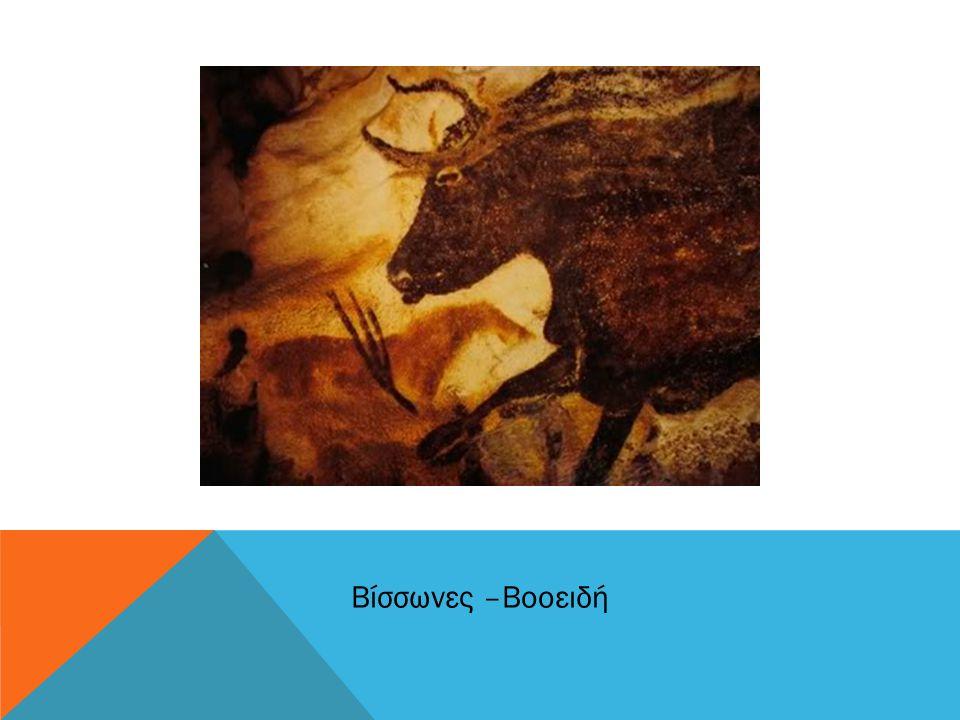 Βίσσωνες –Βοοειδή