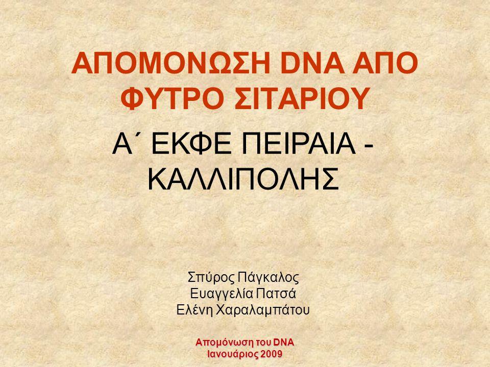 Απομόνωση του DNA Ιανουάριος 2009 ΑΠΟΜΟΝΩΣΗ DNA AΠΟ ΦΥΤΡΟ ΣΙΤΑΡΙΟΥ A΄ ΕΚΦΕ ΠΕΙΡΑΙΑ - ΚΑΛΛΙΠΟΛΗΣ Σπύρος Πάγκαλος Ευαγγελία Πατσά Ελένη Χαραλαμπάτου