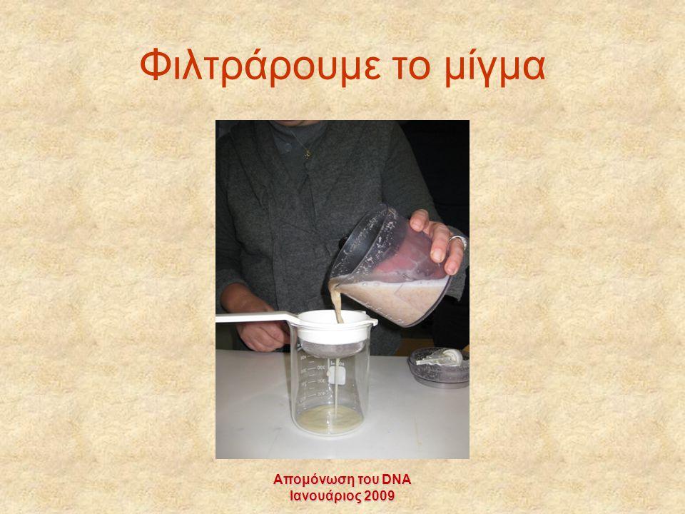 Απομόνωση του DNA Ιανουάριος 2009 Φιλτράρουμε το μίγμα
