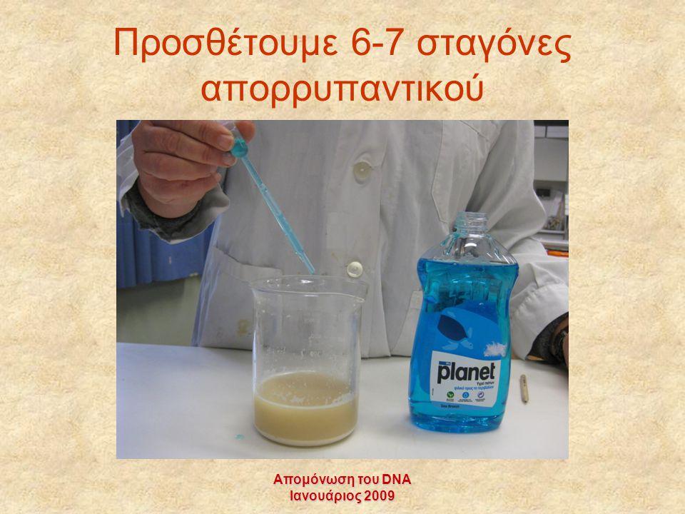 Απομόνωση του DNA Ιανουάριος 2009 Προσθέτουμε 6-7 σταγόνες απορρυπαντικού