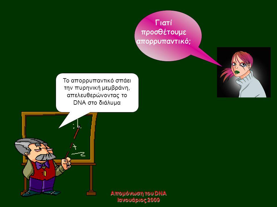 Απομόνωση του DNA Ιανουάριος 2009 Γιατί προσθέτουμε απορρυπαντικό; Το απορρυπαντικό σπάει την πυρηνική μεμβράνη, απελευθερώνοντας το DNA στο διάλυμα