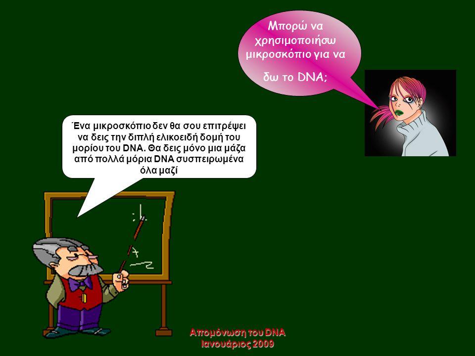 Απομόνωση του DNA Ιανουάριος 2009 Μπορώ να χρησιμοποιήσω μικροσκόπιο για να δω τo DNA; Ένα μικροσκόπιο δεν θα σου επιτρέψει να δεις την διπλή ελικοειδ