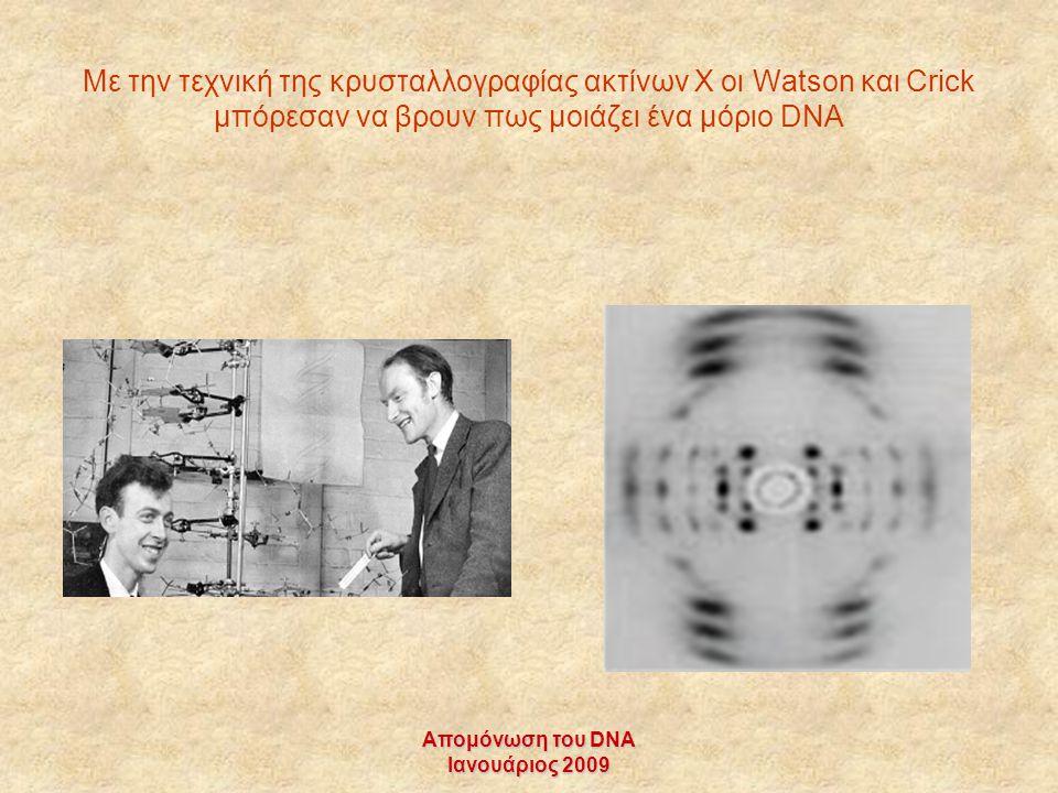 Απομόνωση του DNA Ιανουάριος 2009 Με την τεχνική της κρυσταλλογραφίας ακτίνων Χ οι Watson και Crick μπόρεσαν να βρουν πως μοιάζει ένα μόριο DNA