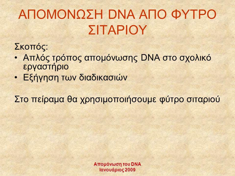 Απομόνωση του DNA Ιανουάριος 2009 ΑΠΟΜΟΝΩΣΗ DNA AΠΟ ΦΥΤΡΟ ΣΙΤΑΡΙΟΥ Σκοπός: Απλός τρόπος απομόνωσης DNA στο σχολικό εργαστήριο Εξήγηση των διαδικασιών