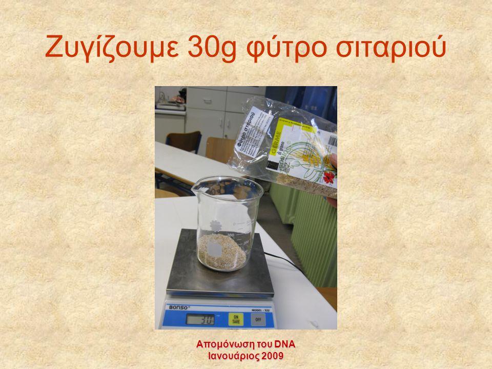 Απομόνωση του DNA Ιανουάριος 2009 Ζυγίζουμε 30g φύτρο σιταριού