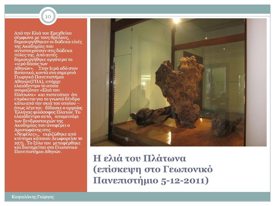 Η ελιά και η ιστορία της 9 Καψαλάκης Γιώργος