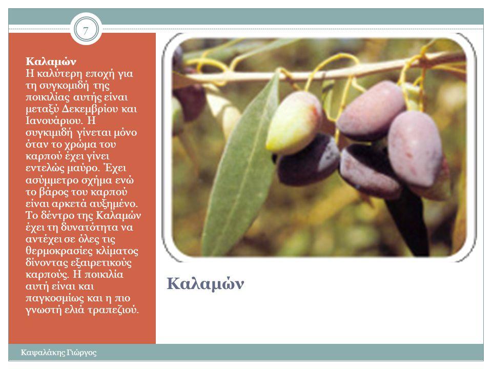 Κορωνέικη Κορωνέικη Είναι η πιο γνωστή ποικιλία ελιάς στην Ελλάδα αφού της αντιστοιχεί το 60% της ελληνικής παραγωγής. Έχει μικρό μέγεθος και ωριμάζει