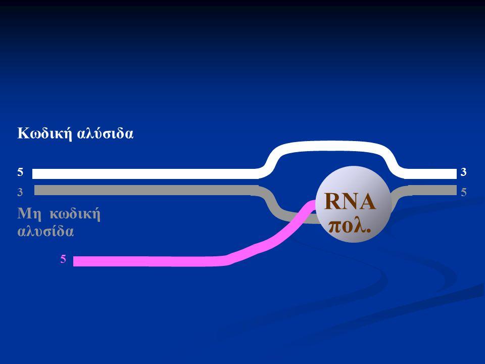 5 3 3 5 Μη κωδική αλυσίδα Κωδική αλύσιδα 5 RNA πολ.