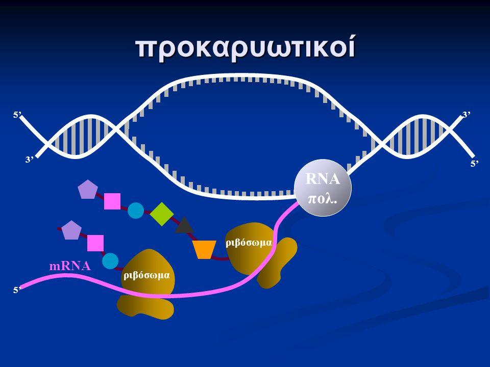 προκαρυωτικοί: ένα είδος RNA πολυμεράσης. το mRNA αρχίζει να μεταφράζεται σε πρωτεΐνη πριν ακόμη ολοκληρωθεί η μεταγραφή του ευκαρυωτικοί: τρία είδη R