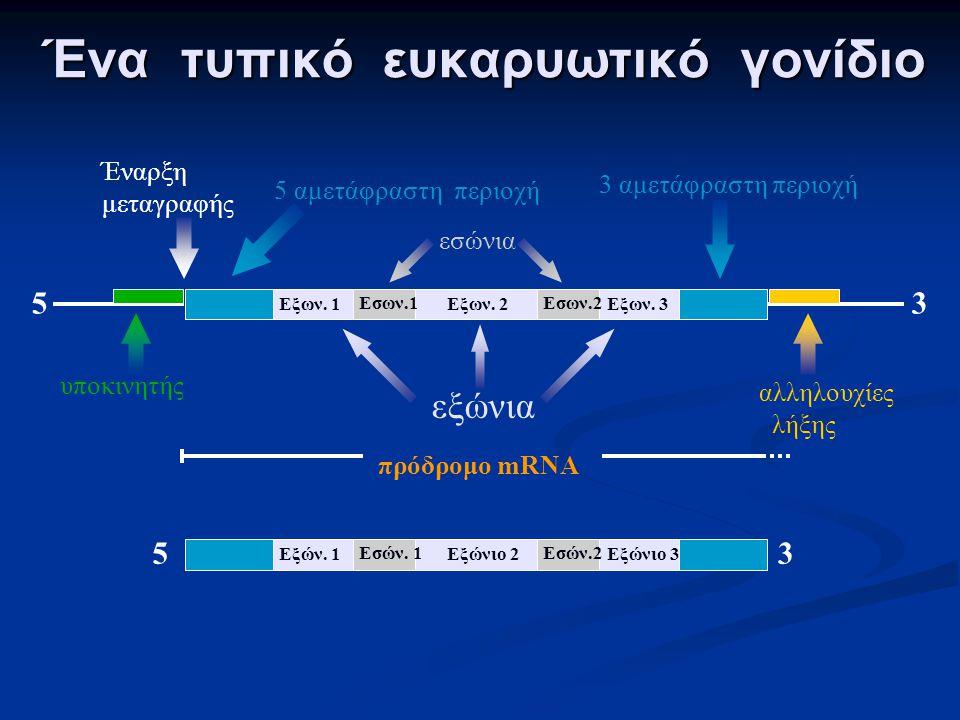 ευκαρυωτικοί DNA κυτταρόπλασμα πυρήνας έξοδος G AAAAAA RNA αντιγραφή πυρηνικοί πόροι G AAAAAA Ωρίμανση mRNA