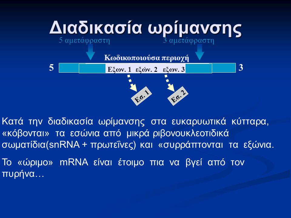 Ένα τυπικό ευκαρυωτικό γονίδιο αλληλουχίες λήξης υποκινητής Έναρξη μεταγραφής πρόδρομο mRNA 5 αμετάφραστη περιοχή 3 αμετάφραστη περιοχή εξώνια εσώνια