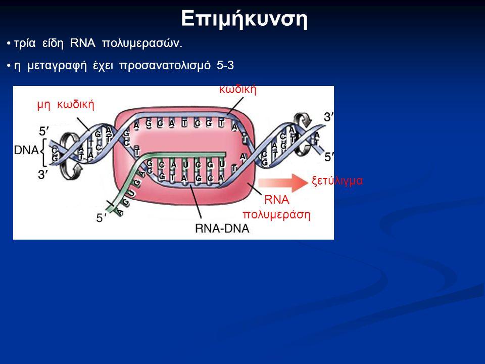 Έναρξη Ρυθμιστικά στοιχεία της μεταγραφής: υποκινητές ρυθμιστικοί παράγοντες υποκινητής Ρ. Π. RNA πολ. Ρ. Π. Ρ.Π.Ρ.Π. RNA Pol. 5' RNA