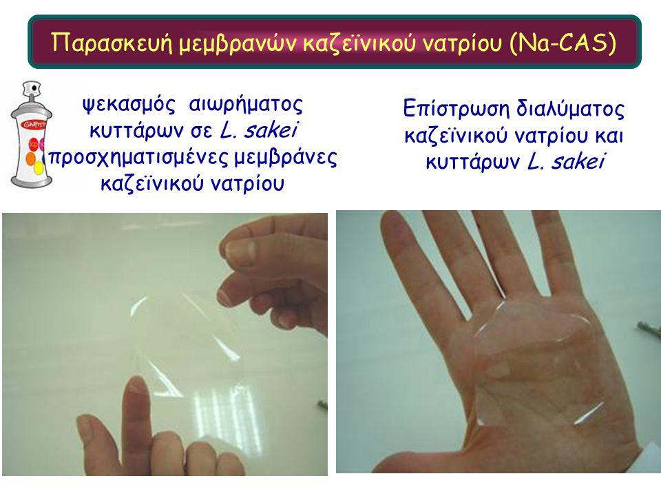 Επίστρωση διαλύματος καζεϊνικού νατρίου και κυττάρων L. sakei ψεκασμός αιωρήματος κυττάρων σε L. sakei προσχηματισμένες μεμβράνες καζεϊνικού νατρίου Π