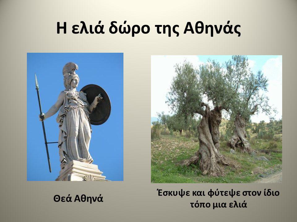 Η ελιά του Αρισταίου Ο Αρισταίος, γιος του Απόλλωνα Ελλάδα, Σαρδηνία, Σικελία
