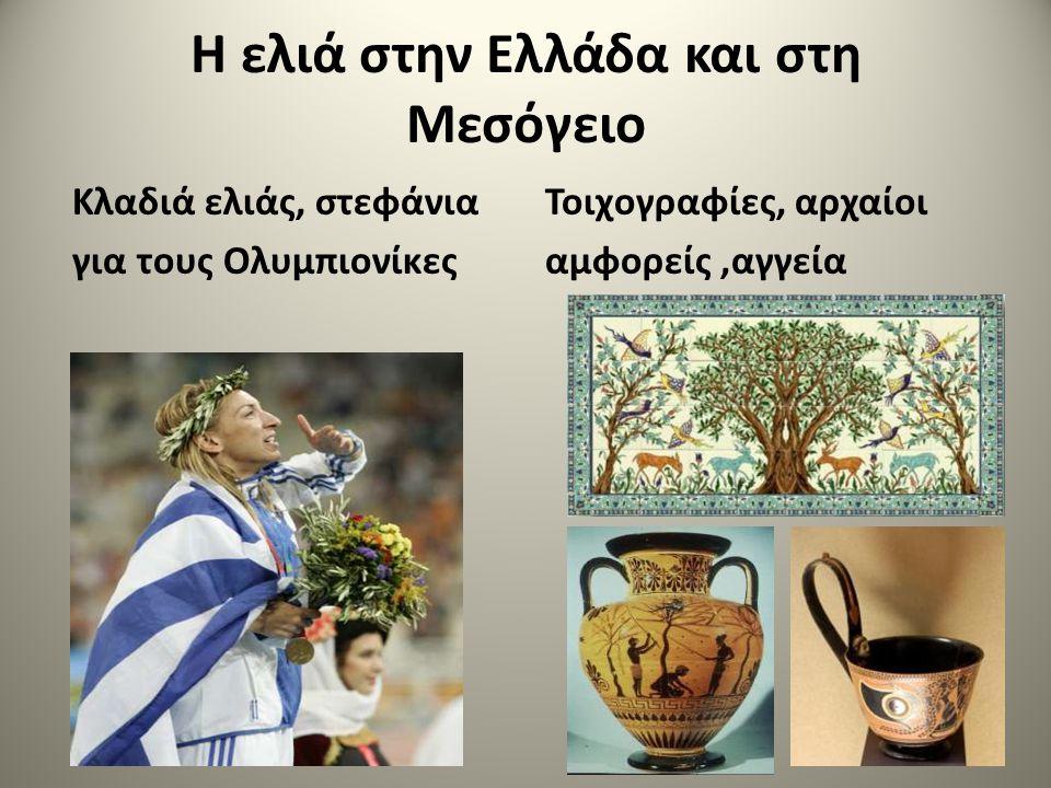 Η ελιά στην Ελλάδα και στη Μεσόγειο Κλαδιά ελιάς, στεφάνια για τους Ολυμπιονίκες Τοιχογραφίες, αρχαίοι αμφορείς,αγγεία